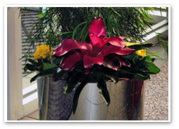 Combination of the bromeliad and 5-inch line